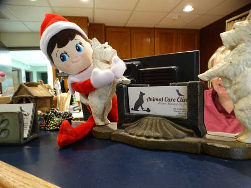 Meet Patrick, the ACC Elf!