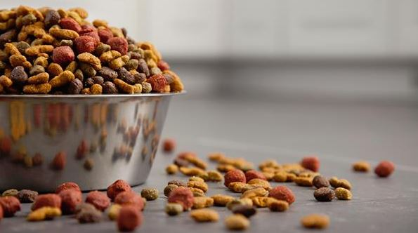 Concerns with Grain-Free Pet Food: Updates on Diet-Associated Heart Disease in Dogs