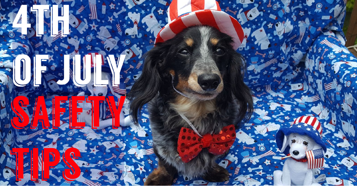 4th of July Pet Safety and Comfort Tips