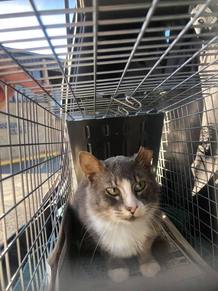 Community Cat Coalition Update