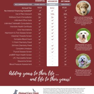 Preventive Care Plans for Dogs